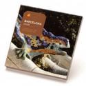 Postal Gaudiniana de Chocolate Drac Park Güell
