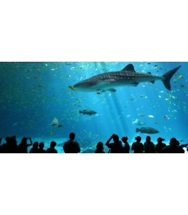 L'Aquàrium de Barcelona, la vie sous la mer